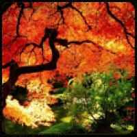 Entre no clima de outono com lindos papéis de parede